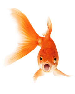 shocked fishy (2E)