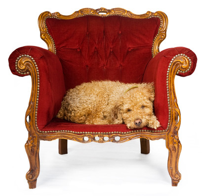 dog in red chair (1A)