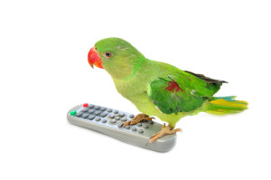 green parrot:remote (2B)