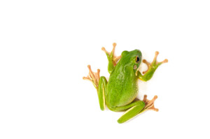 small frog (2A)