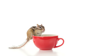 chipmunk w: coffee (3D)